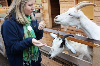 Sweet-talking the Goats